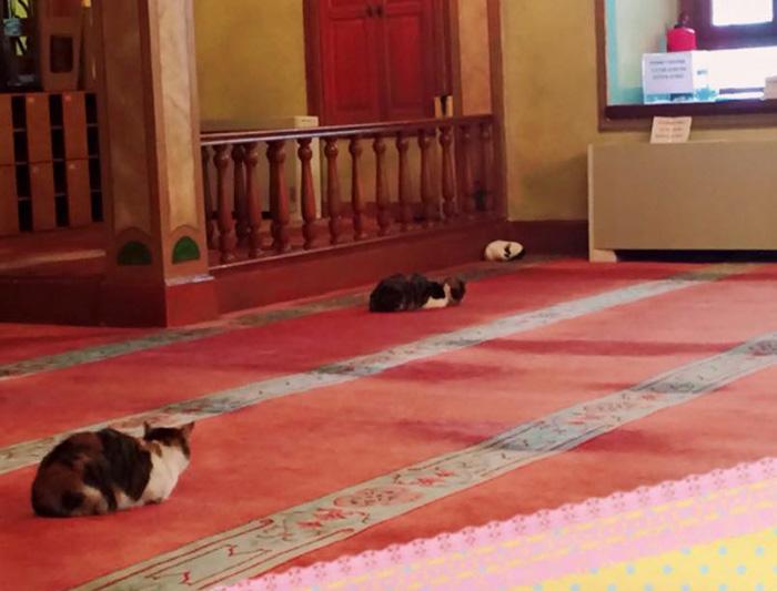Mosque Cat 4