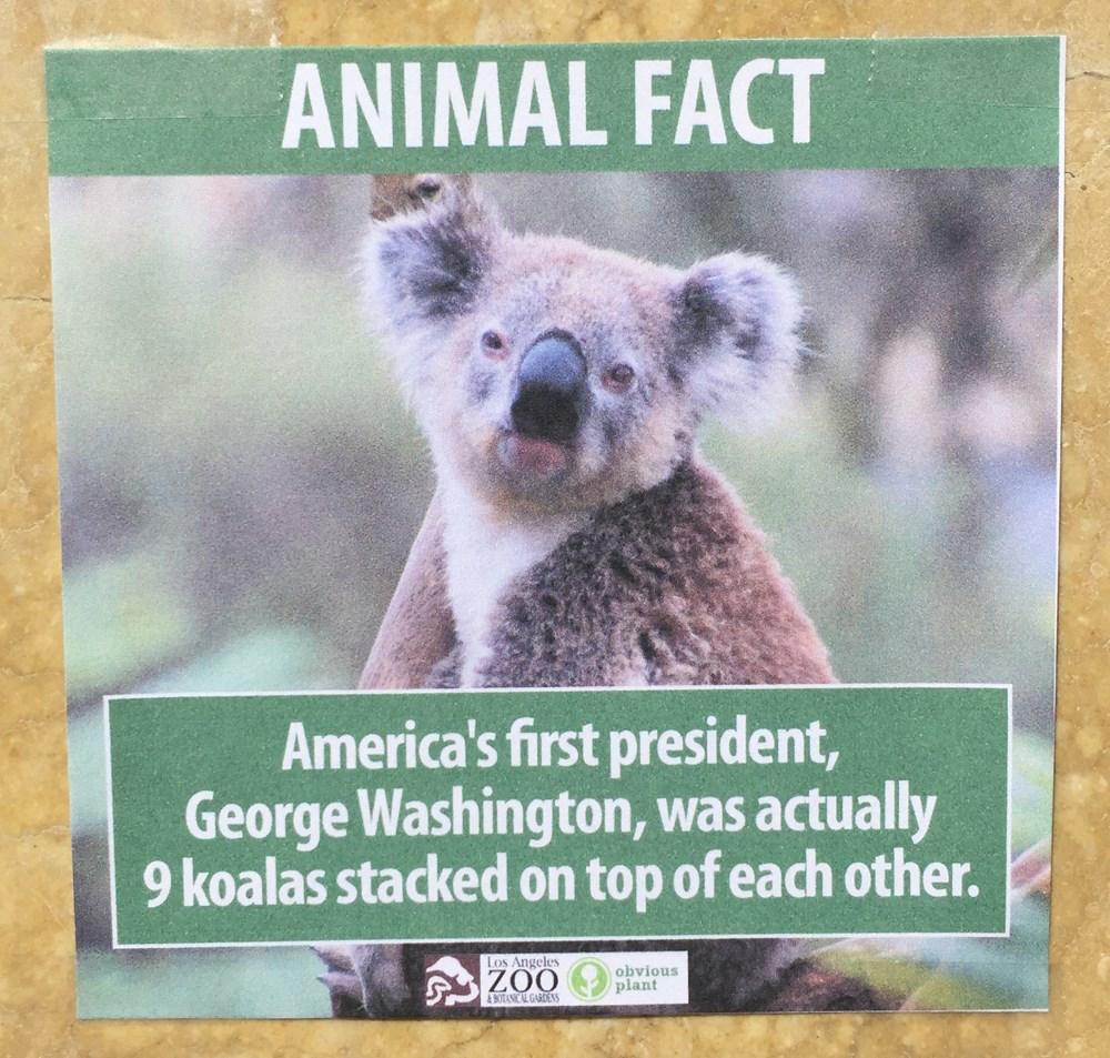Fake Animal Fact 3