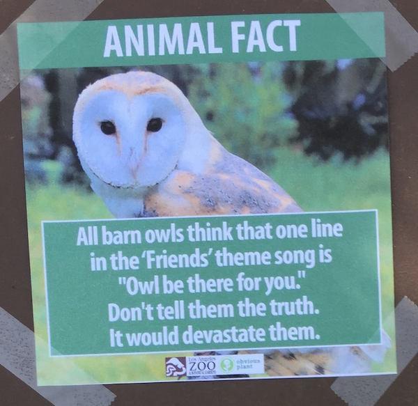 Fake Animal Fact 4