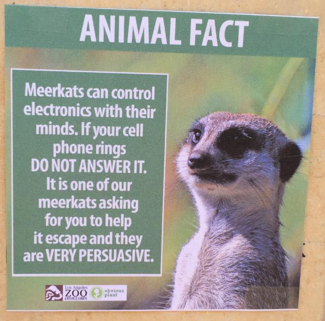 Fake Animal Fact 5