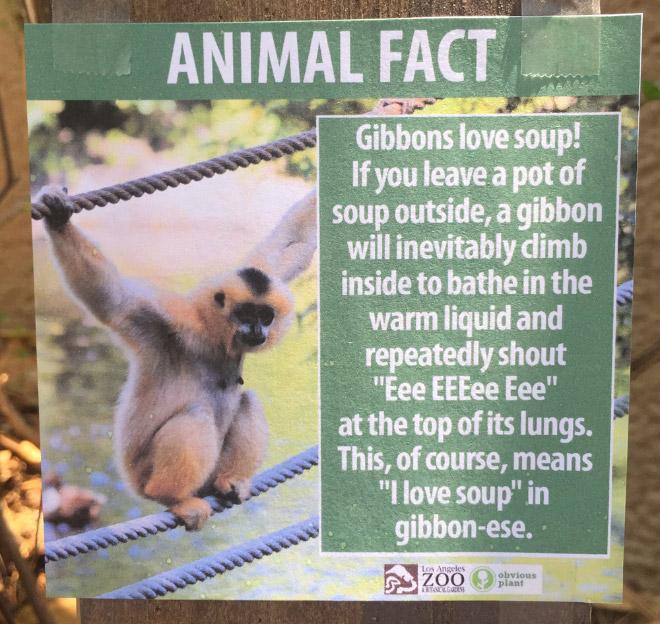 Fake Animal Fact 6