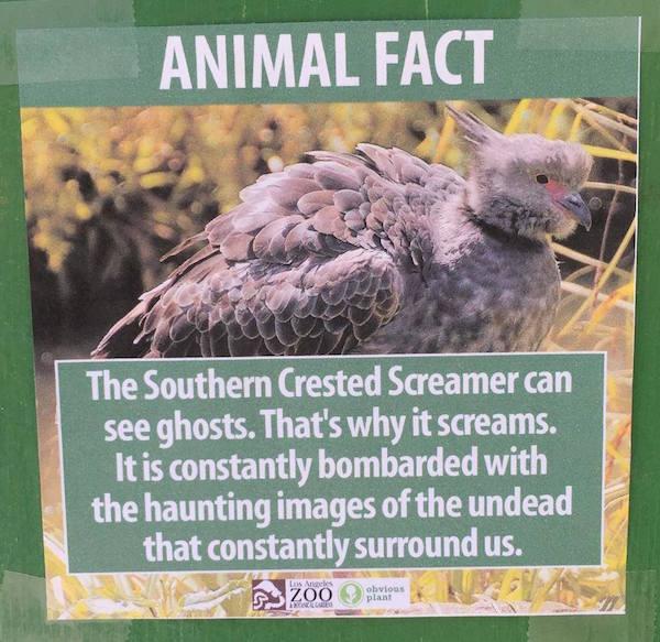 Fake Animal Fact 7