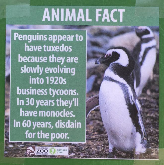 Fake Animal Fact 9